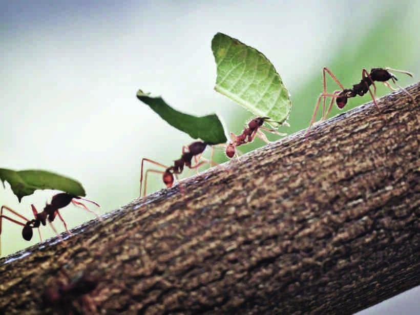 perfil empreendedor - formiga